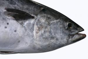 Stock tuna
